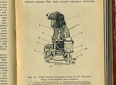 Собачье сердце. Советский биоробот — фото 2
