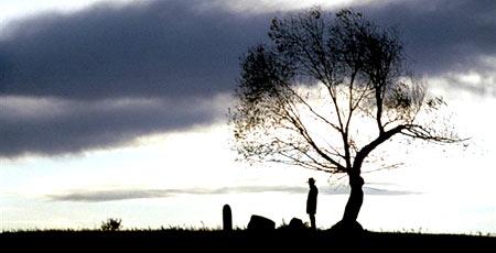 Клинт. Дерево. Одиночество