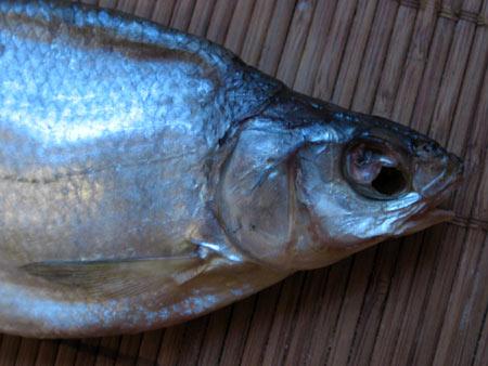 Головная часть рыбца