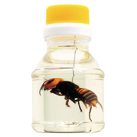 Гигансткий шершень в меду — Giant Hornet`s Honey