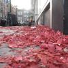 Послепати 2011. Амстердам