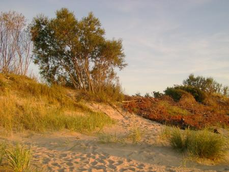 Вечернее солнце на дюнах у пляжа