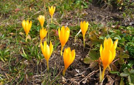 """цветы на """"Альпийских лугах"""""""