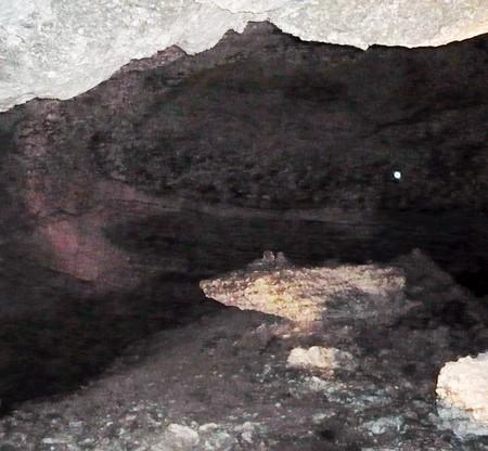 Каменная крыса