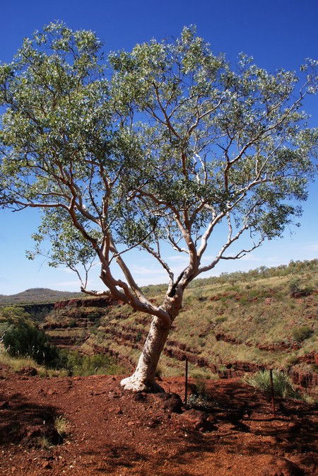 Австралия – красная земля, белые попугаи и зеленые оазисы — фото 9