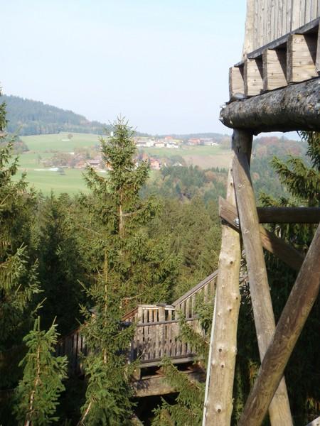 Тропа по кронам деревьев – австрийский Baumkronenweg. — фото 13