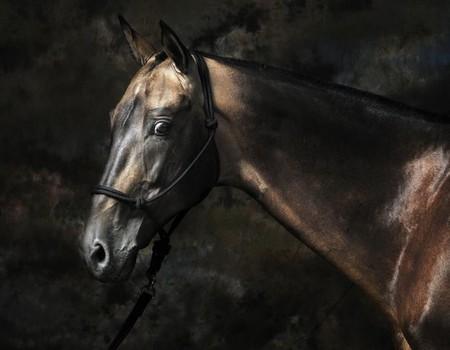 О лошадях с любовью: фотографии Светланы Петровой. — фото 6