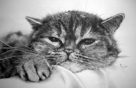 Кошки — страсть художника!