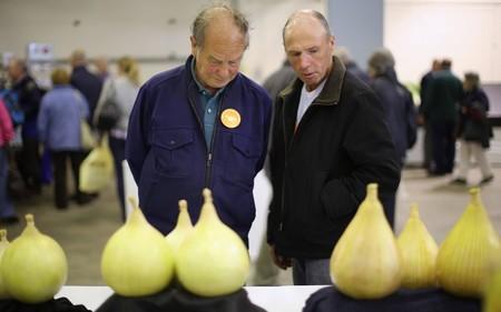Овощи-гиганты на садовой выставке в Харрогейте — фото 6