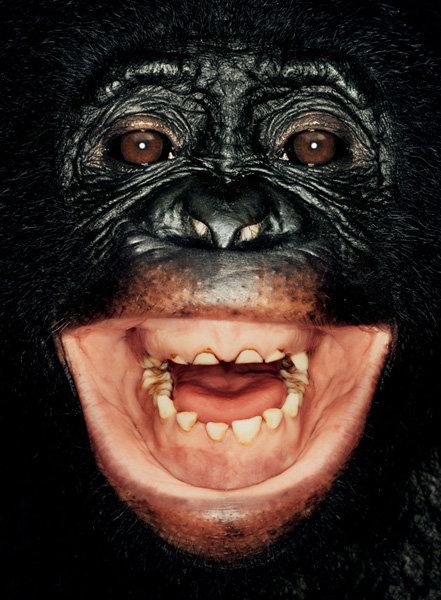 Серия портретов обезьян от Джеймса Моллисона — фото 4