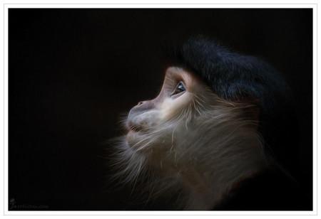 Портреты животных от Мануэлы и Стефана Кульпа — фото 5