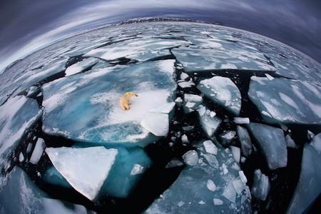 Медведь во льдах от Анны Хенли