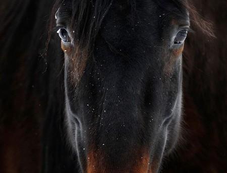 О лошадях с любовью: фотографии Светланы Петровой. — фото 7