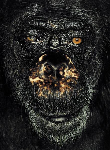 Серия портретов обезьян от Джеймса Моллисона — фото 5