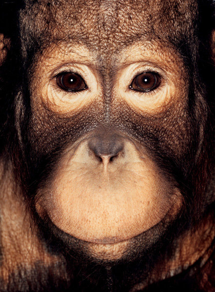 Серия портретов обезьян от Джеймса Моллисона — фото 2