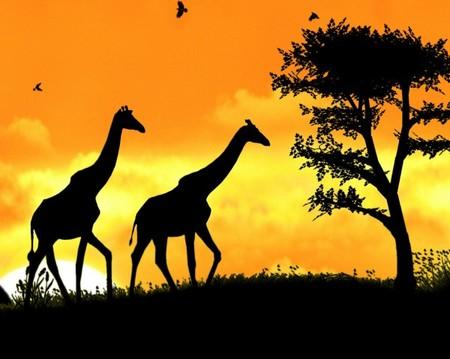 Животные выглядят очень величественно на таком роскошном фоне