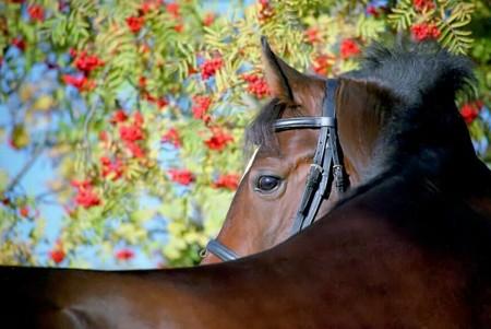 О лошадях с любовью: фотографии Светланы Петровой. — фото 12