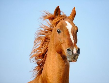 О лошадях с любовью: фотографии Светланы Петровой. — фото 19