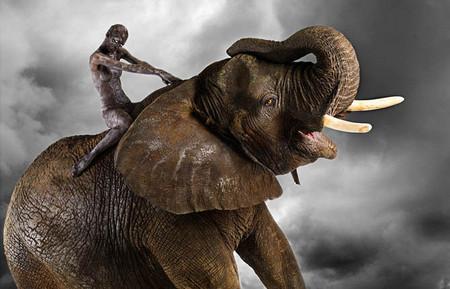 Фото со слоном смотрится грандиозно!