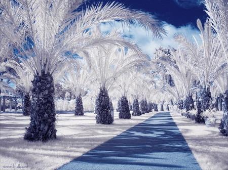 Красота в инфракрасном варианте: фотосет от Марии Нецунски — фото 2