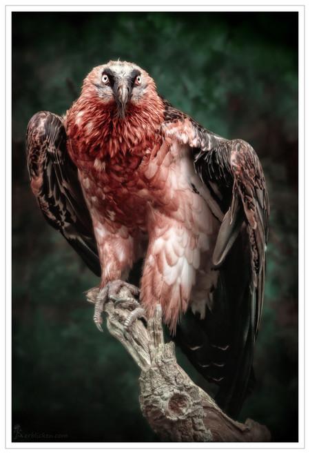 Портреты животных от Мануэлы и Стефана Кульпа — фото 7