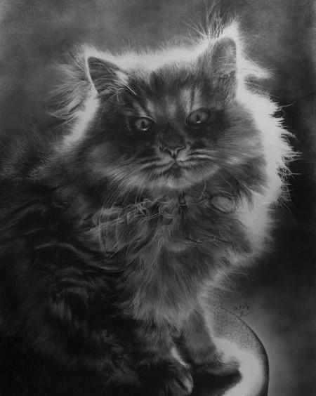 Кошки с удовольствием позируют!