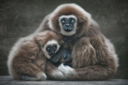 Портреты животных от Мануэлы и Стефана Кульпа — фото 14