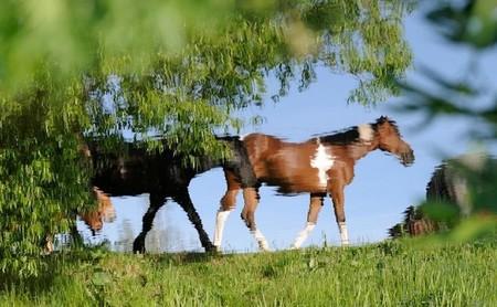 О лошадях с любовью: фотографии Светланы Петровой. — фото 10