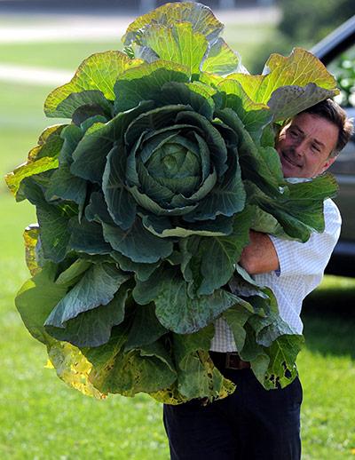 Овощи-гиганты на садовой выставке в Харрогейте — фото 5