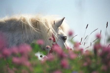 О лошадях с любовью: фотографии Светланы Петровой. — фото 4