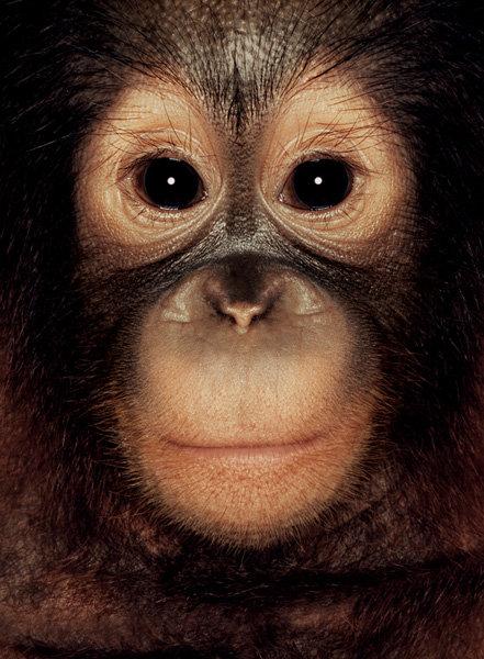 Краткая история каждого животного есть на страницах сайта фотографа, посвященных проекту