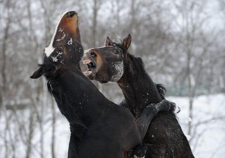 О лошадях с любовью: фотографии Светланы Петровой. — фото 17