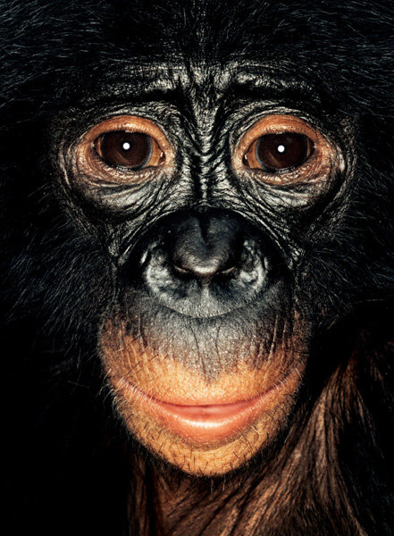 Серия портретов обезьян от Джеймса Моллисона — фото 8