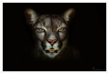 Портреты животных от Мануэлы и Стефана Кульпа — фото 2