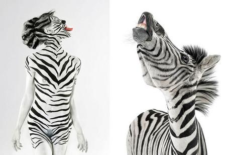 Перевоплощение в зебру