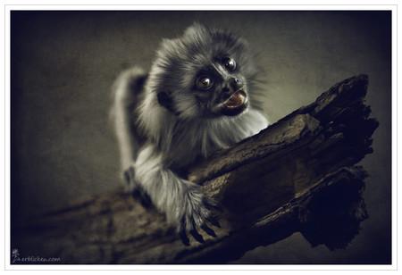 Портреты животных от Мануэлы и Стефана Кульпа — фото 29