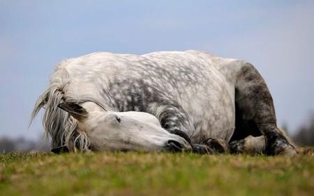 О лошадях с любовью: фотографии Светланы Петровой. — фото 18