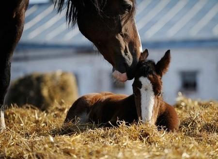О лошадях с любовью: фотографии Светланы Петровой. — фото 1