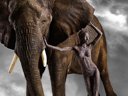 Все мы немножко... гепарды? Фотоработы Леннет Ньюэлл — фото 11