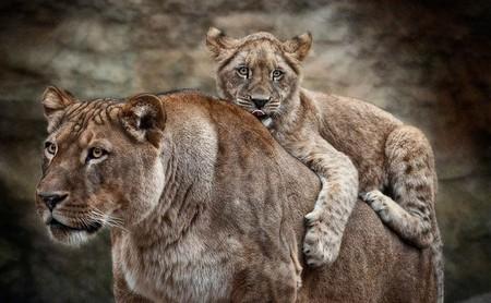 Портреты животных от Мануэлы и Стефана Кульпа — фото 15