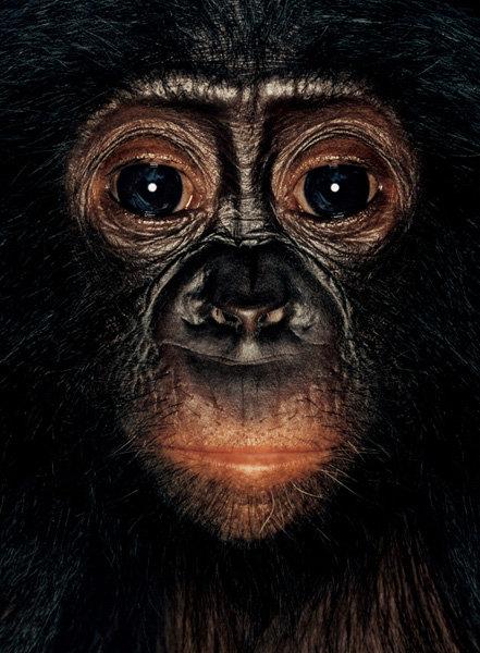Серия портретов обезьян от Джеймса Моллисона — фото 10