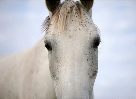 О лошадях с любовью: фотографии Светланы Петровой. — фото 11