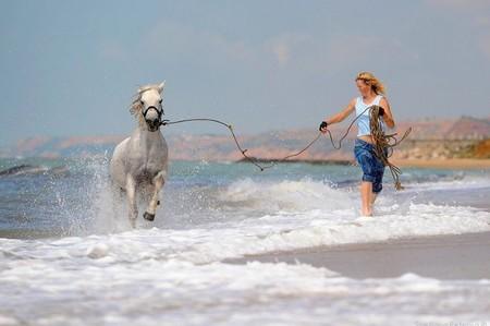 О лошадях с любовью: фотографии Светланы Петровой. — фото 16