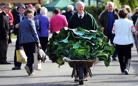 В авоське такую капусту с рынка не принесешь :-)
