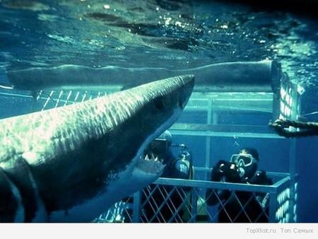На смену акулам приходят крокодилы. Но и зубастые рыбины все еще популярны