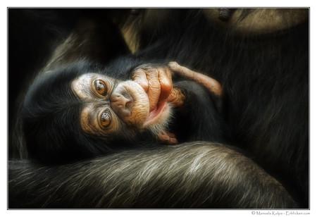 Портреты животных от Мануэлы и Стефана Кульпа — фото 20