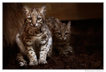 Портреты животных от Мануэлы и Стефана Кульпа — фото 13