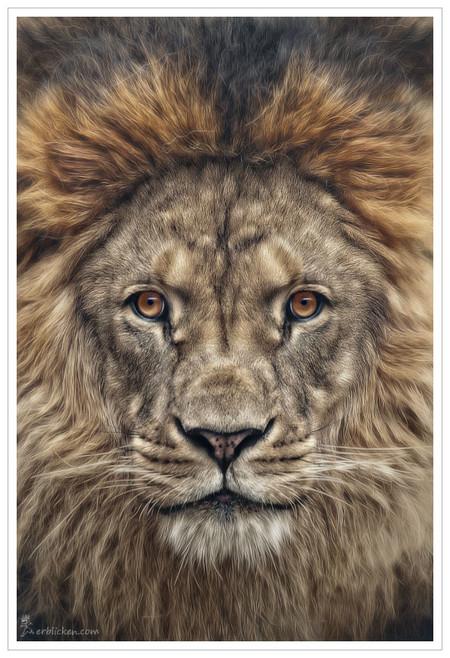 Портреты животных от Мануэлы и Стефана Кульпа — фото 4
