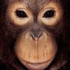 Серия портретов обезьян от Джеймса Моллисона
