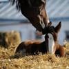 О лошадях с любовью: фотографии Светланы Петровой.
